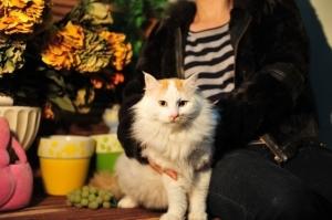 Finda 3 PPAR Adoptable Cat