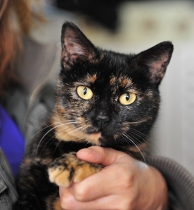 Shiny 1 PPAR Adoptable Cat April 2013