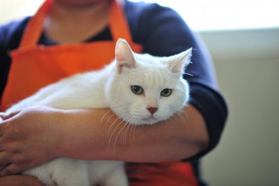 Kirin PPAR Cat 2